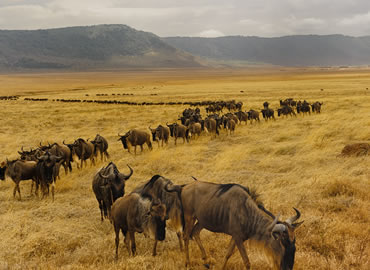 4 days maasai mara Kenya wildebeest migration